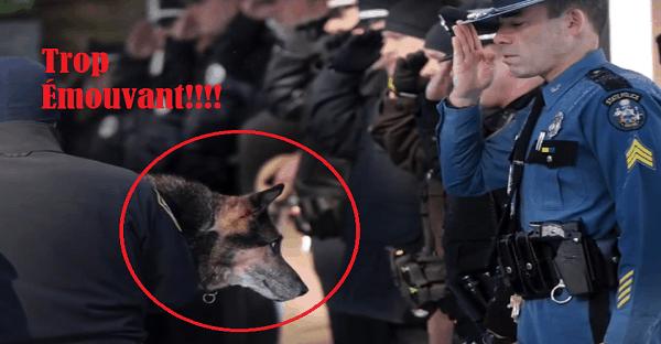 Ce chien est à la fin de sa vie, voyez ce que les policiers font pour lui...