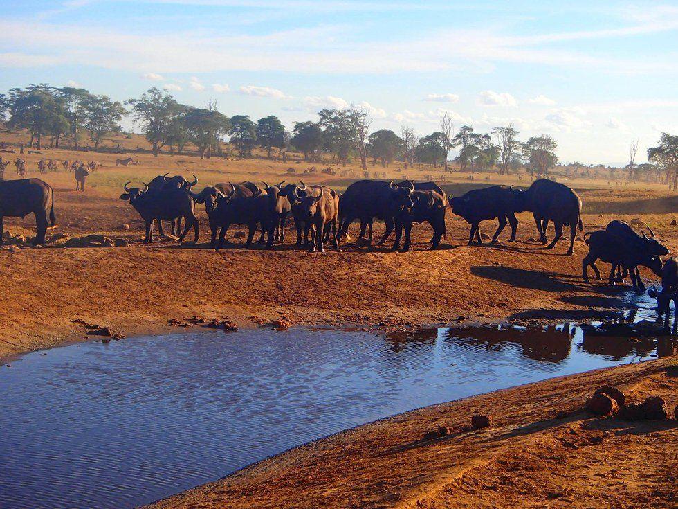 Au Kenya, cet homme amène de l'eau tous les jours, dans des zones reculées, à des animaux qui peuvent mourir de soif à cause de la sécheresse