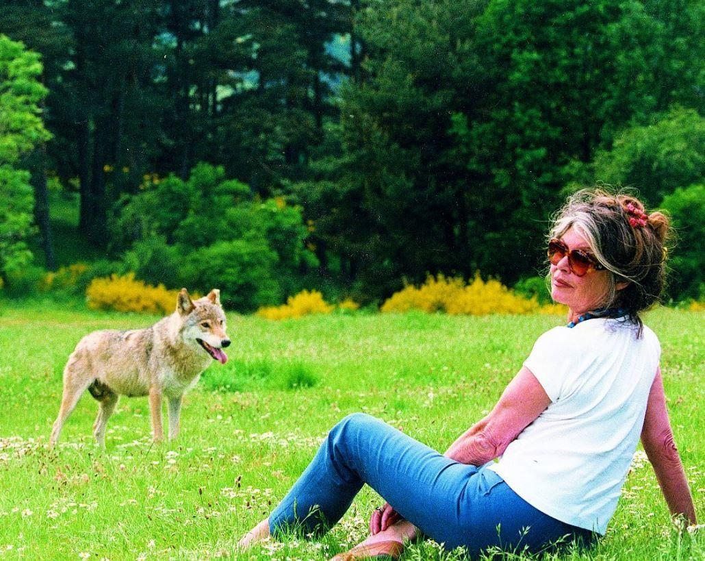 Brigitte Bardot dézingue Nicolas Hulot qui a autorisé l'abattage de 40 loups...
