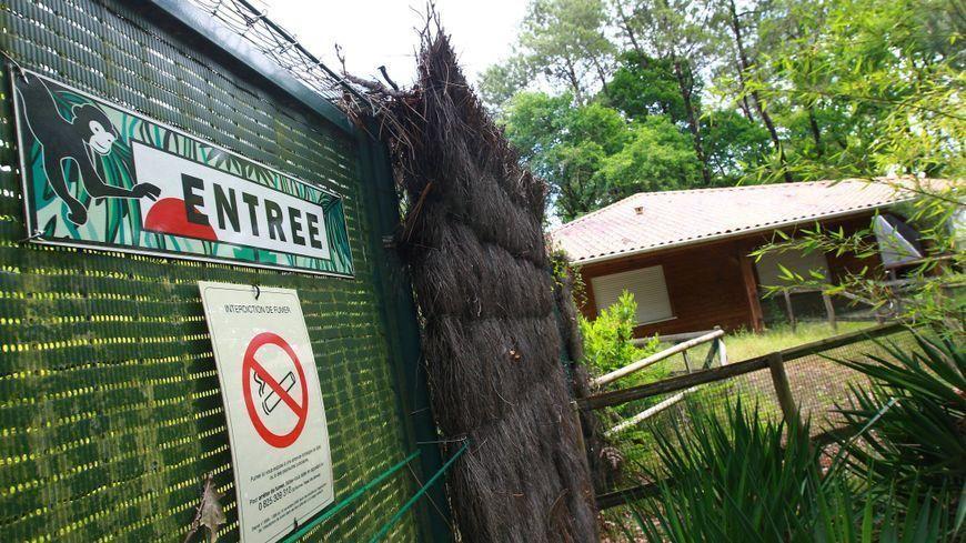 """Un grillage de """"La pinède des singes"""" à Labenne dans les Landes détérioré après l'euthanasie de 163 macaques en mai dernier"""