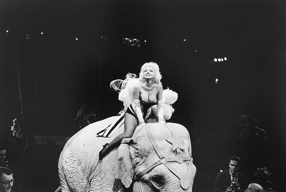 Marilyn Monroe et l'éléphant du cirque Barnum, 30mars 1955.