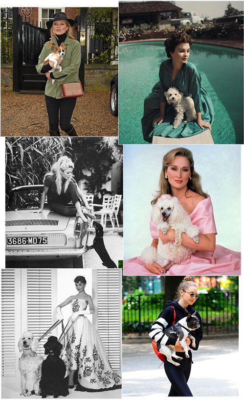 Les plus belles photos des stars et leurs chiens...