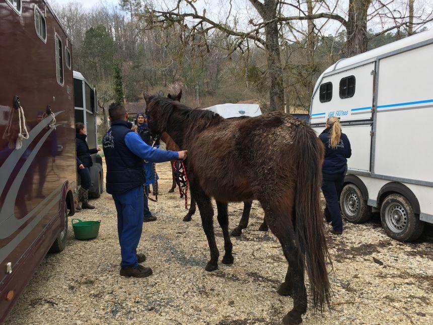 La fondation Brigitte Bardot récupère sept chevaux maltraités en Dordogne...
