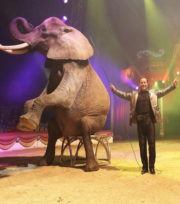 À Dieppe, l'installation d'un cirque crée la polémique...