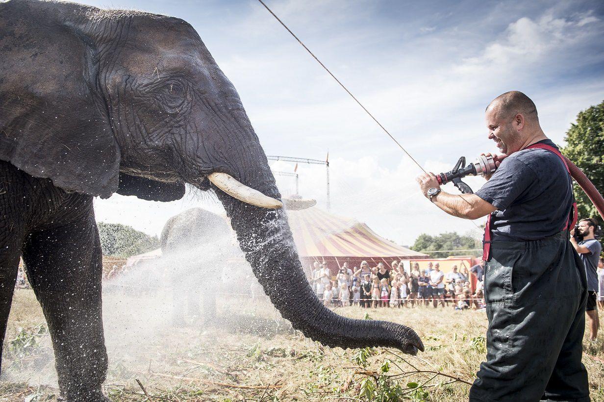 Les éléphants issus du monde du cirque ont leur tout premier sanctuaire en Europe