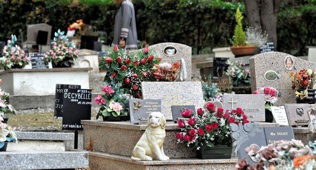 Brigitte Bardot : «J'accepte d'être marraine du cimetière»