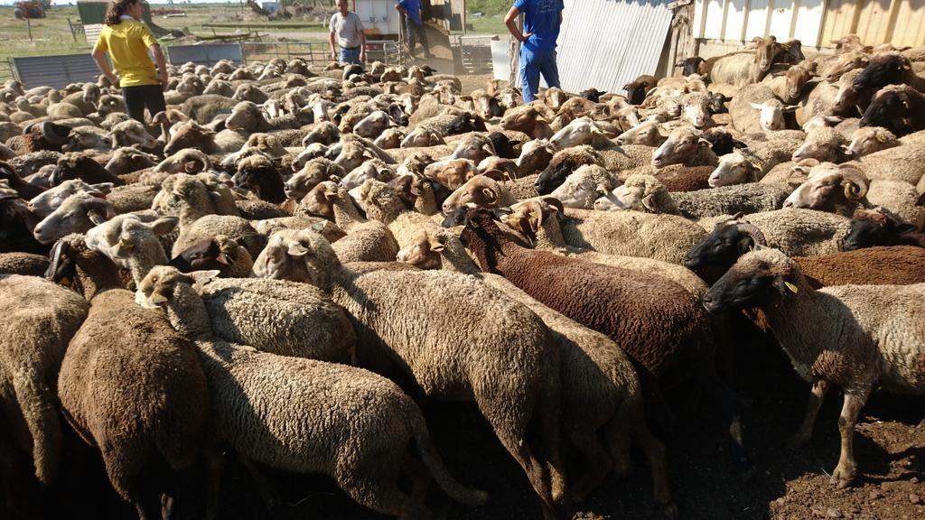 Aïd el-Kebir : intervention en cours dans les Bouches-du-Rhône, déjà 400 moutons placés sous la protection de la FBB...