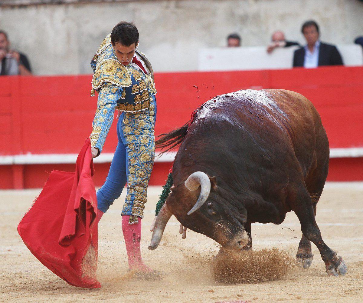 Bayonne : le torero Thomas Joubert grièvement blessé lors de la Féria de l'Atlantique