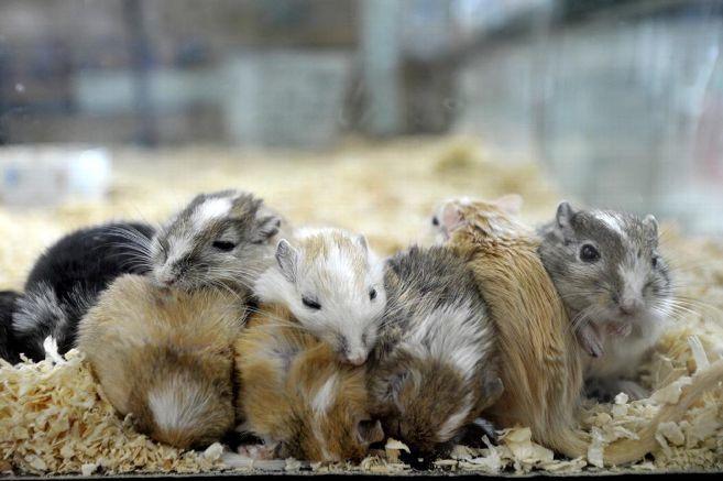 Les animaux étaient destinés à approvisionner les animaleries.