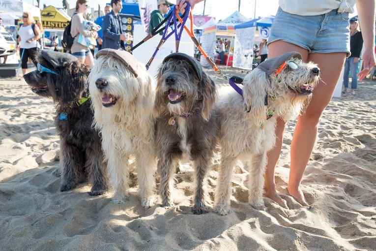 États-Unis. Californie : pour les animaleries, interdiction d'acheter des animaux ailleurs qu'au refuge