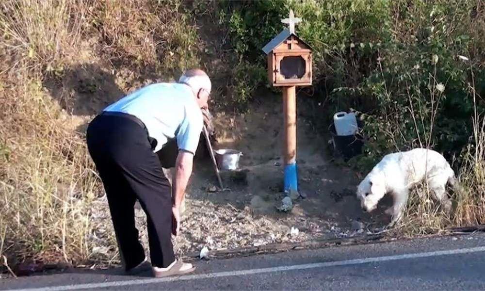 Un chien refuse de s'éloigner du lieu où son maître est mort 18 mois plus tôt