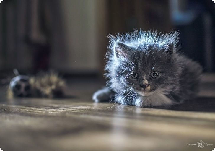 Les Chats en 100 photos...