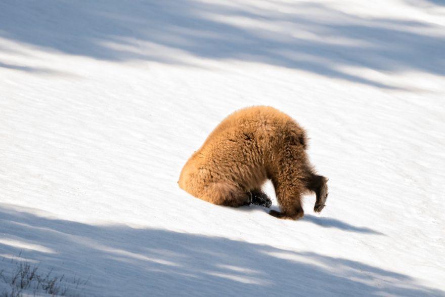 40 photos insolites d'animaux...