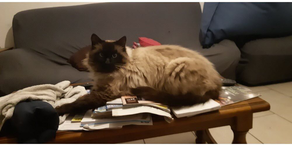 Nougat, un chat tué d'une balle de 22 long rifle
