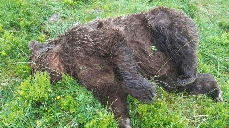 le cadavre d'un ours découvert dans en Ariège / © twitter Elisabeth Borne