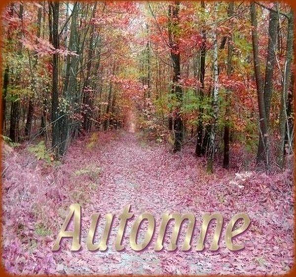 «En automne, je récoltai toutes mes peines et les enterrai dans mon jardin. Lorsque avril refleurit et que la terre et le printemps célébrèrent leurs noces, mon jardin fut jonché de fleurs splendides et exceptionnelles.»[ Khalil Gibran ]