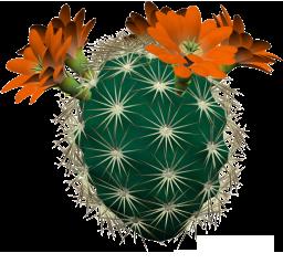 Fleurs : Clipart en png - Cactus, violettes, hibiscus et autres fleurs d'intérieur