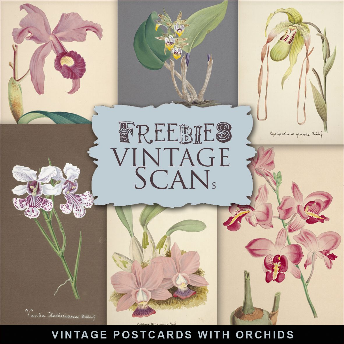 Freebies Kit of Vintage Postcards with Orchids, Freebies, Postcards, Vintage, Flowers, Vintage Orchids, Vintage orchidées, Orchidées, fleurs vintage, Kit de scrapbooking vintage, Scrapbook kit vintage,