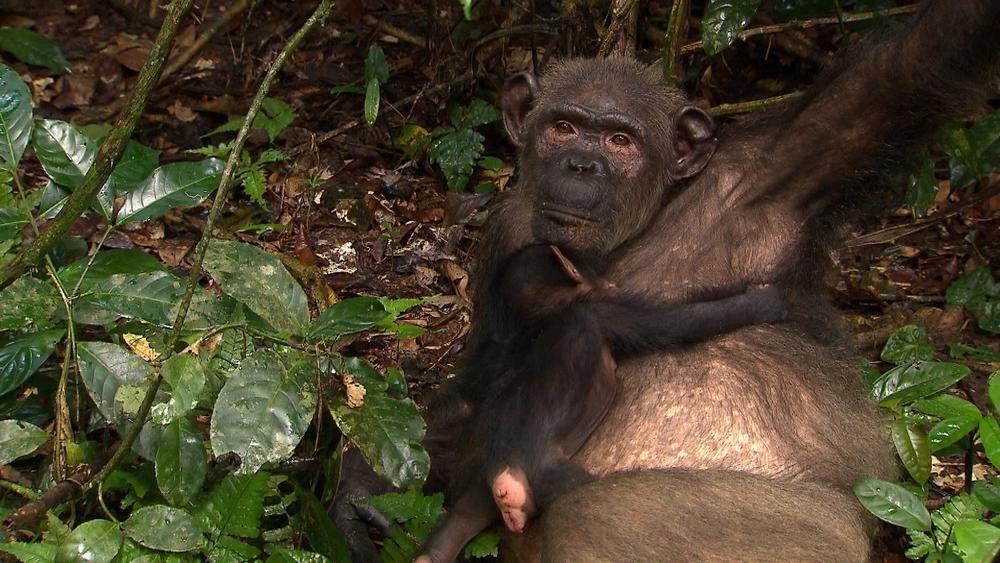 Les anges de la jungle : reportage ce samedi après-midi sur TF1.