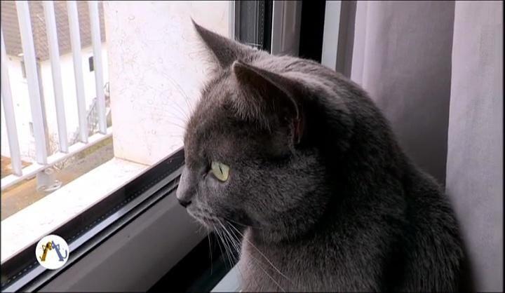 Comme chien et chat : documentaire narré par Dechavanne ce soir sur France 4.