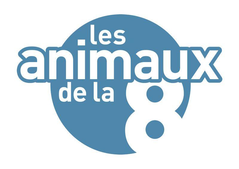Le  dimanche 22 septembre sur C8, numéro spécial des Animaux de la 8, au Maroc.