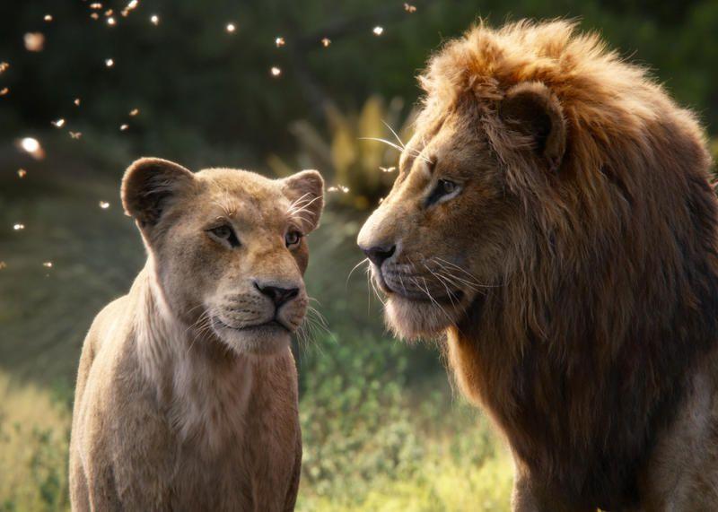 Ce mardi soir sur Canal+, diffusion de l'énorme succès Le Roi Lion (2019).