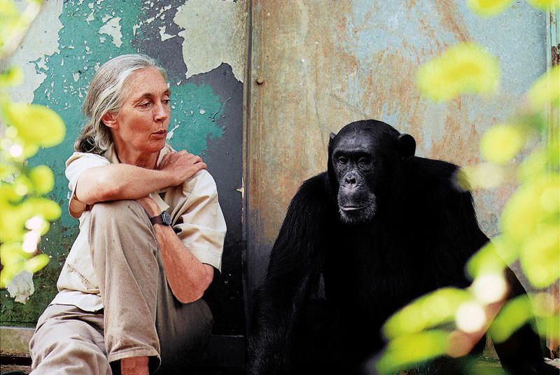 À voir ce mercredi soir : « Jane Goodall : un message d'espoir ».