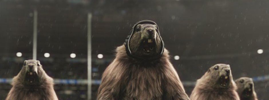 Les marmottes sportives dès ce week-end sur France 3 (Vidéo).