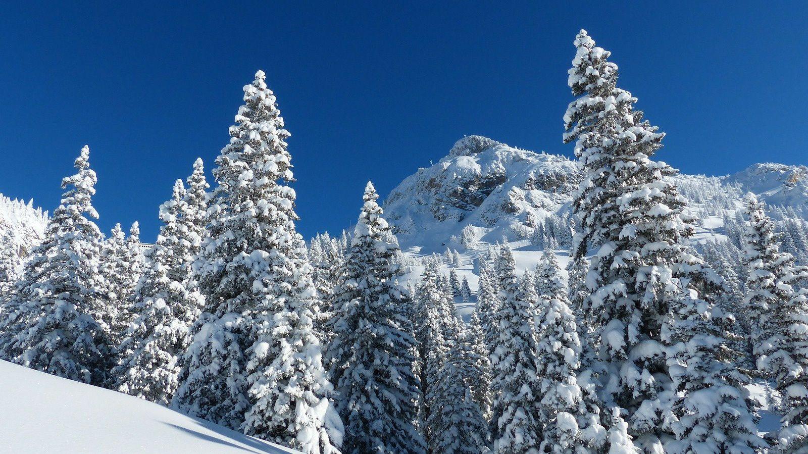 organisation pour le ski