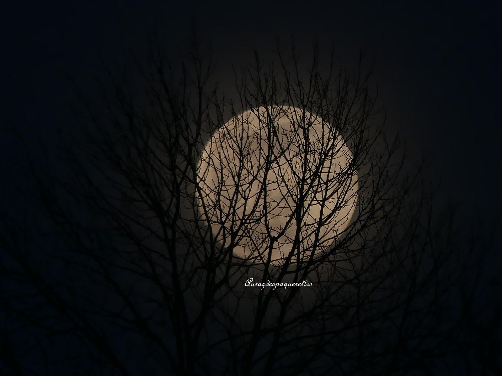 Photographie | Super Pleine Lune 09 Mars 2020