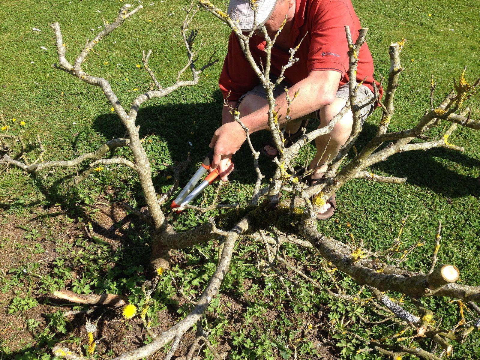 Les Magnolias - Jardinage à Frescati