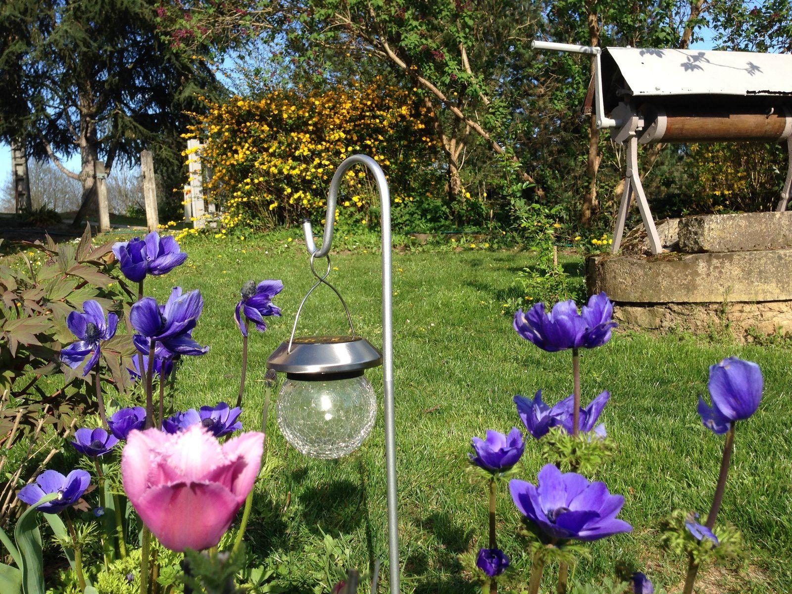 Pâques est arrivé et les fleurs du Kerria japonica (Rosier de Pâques) étaient pile au rendez-vous !