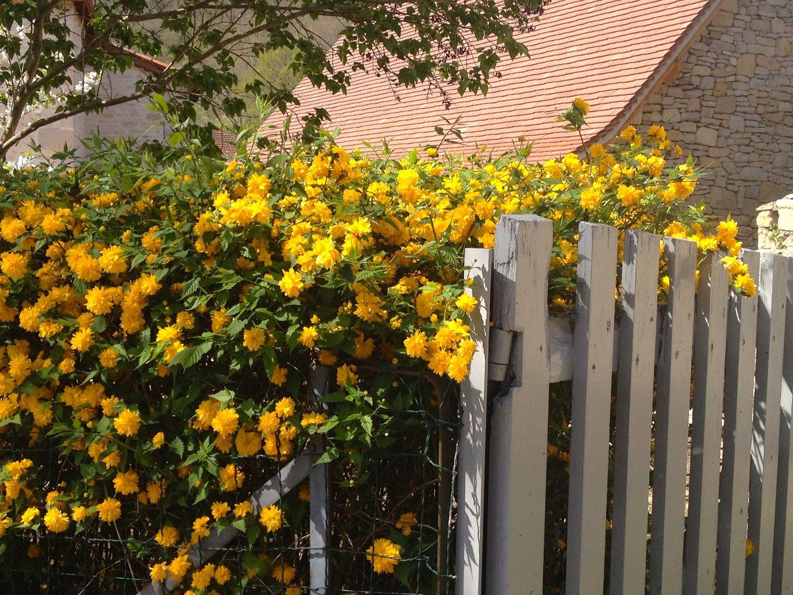 Mon jardin jaune Feng Shui