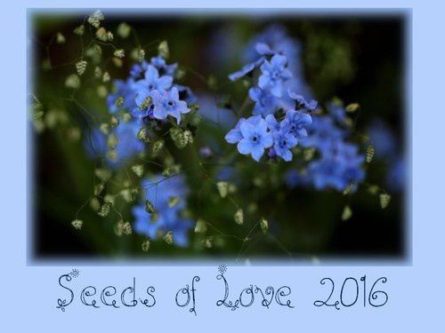 Seeds of Love 2016 : and the winners are...