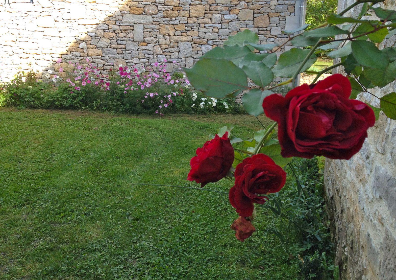 Merci aux Seedlovers - Flo des Ardennes