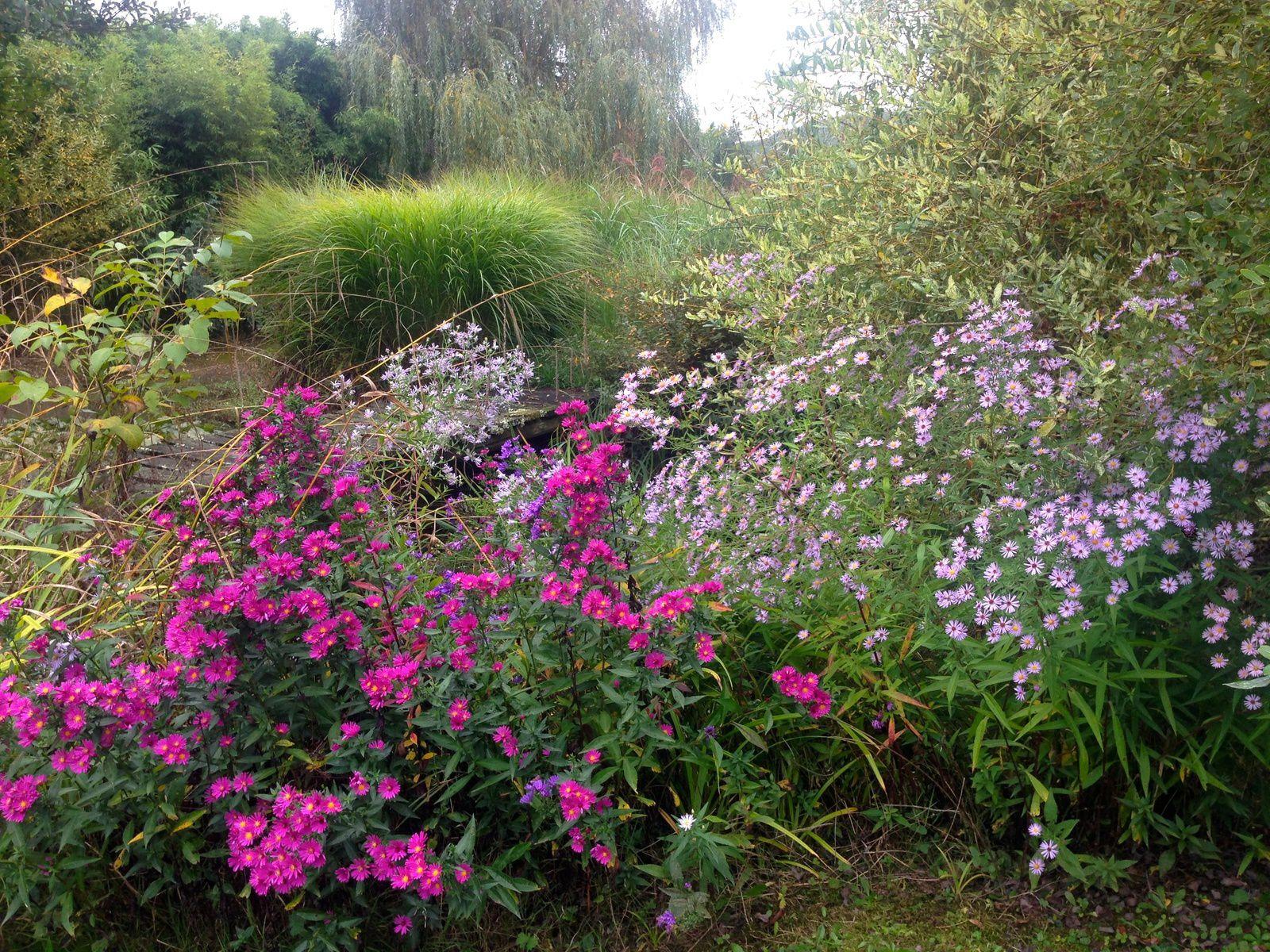 Merci aux seedlovers - Roseline du Jura
