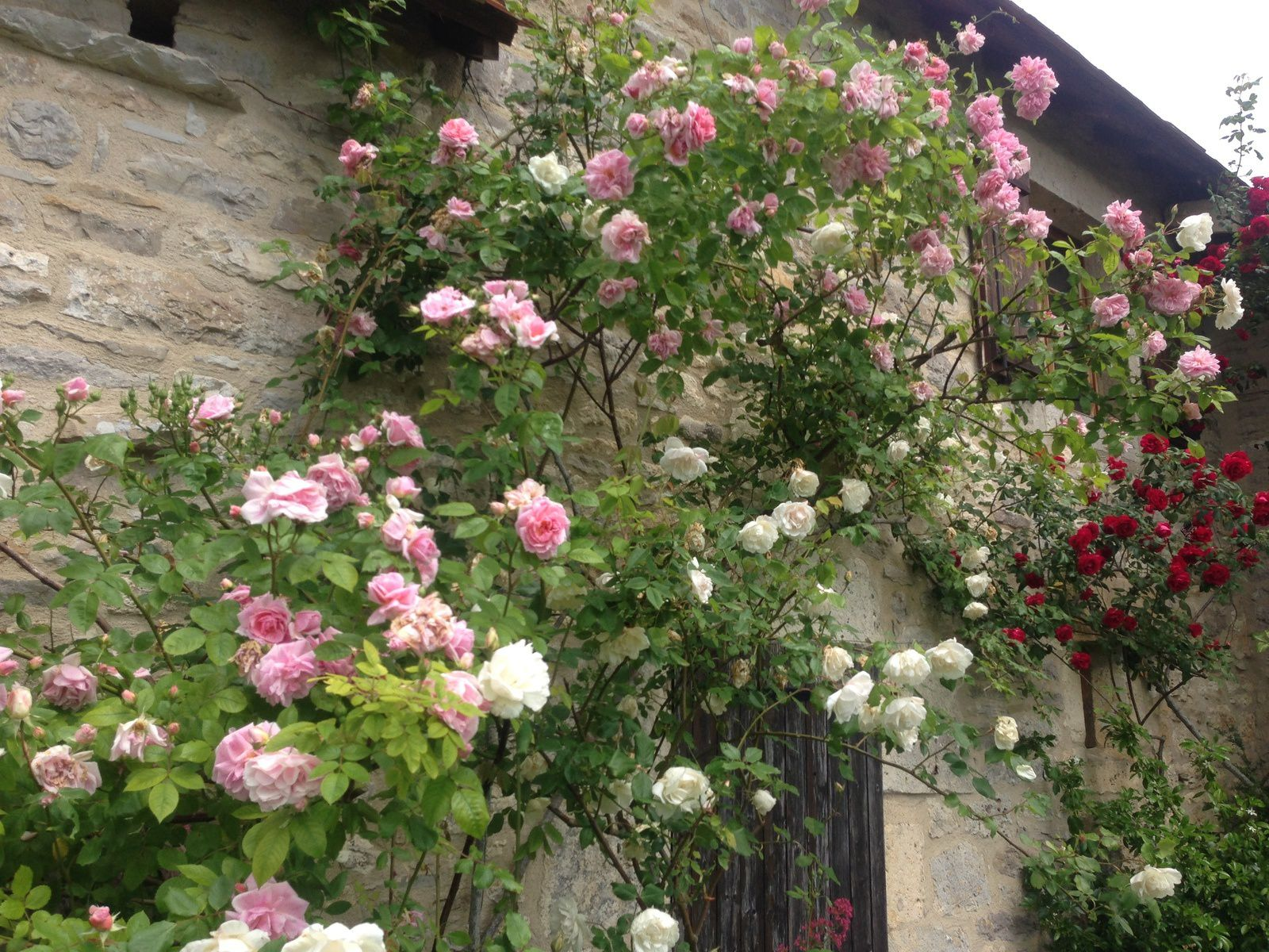 Faire Un Rosier Avec Une Rose le jardin des roses - tarn et garonne - jardins merveilleux