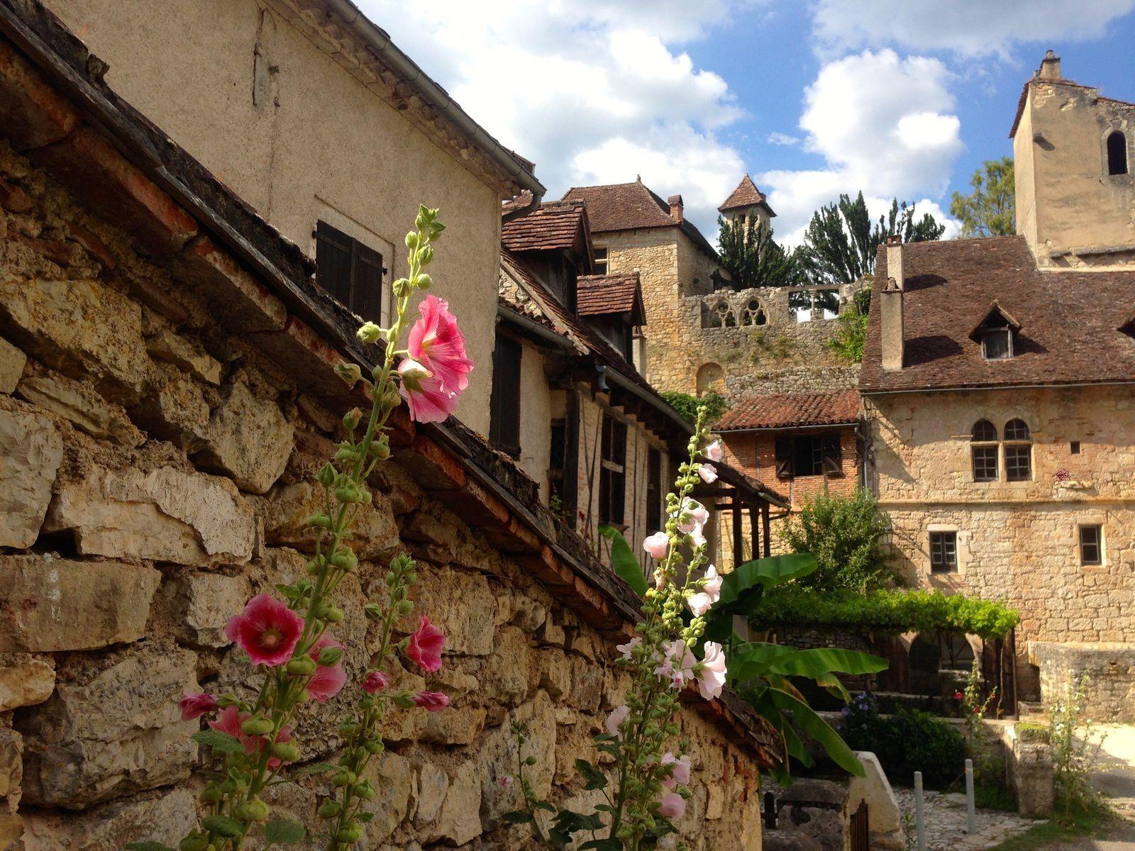 Roses trémières sur la placette