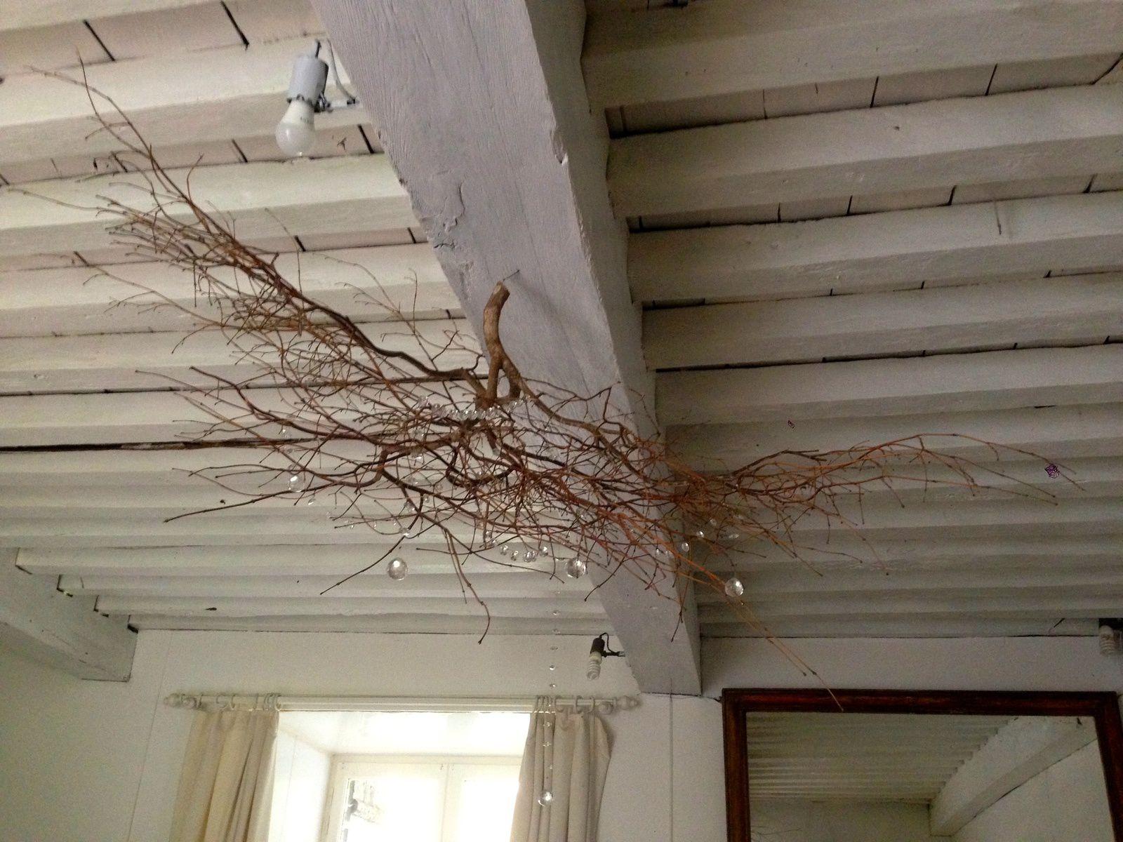 Pampilles accrochées à une branche d'érable