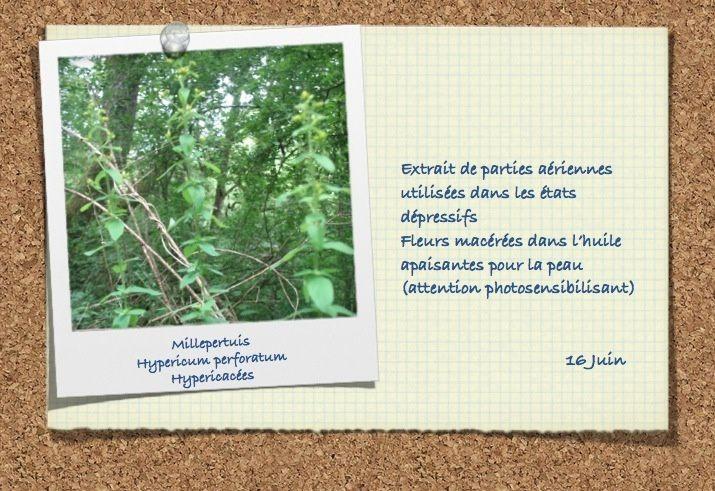 Des plantes compagnes oui, mais prudence !
