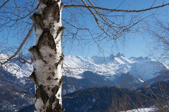Anywhere out of the world - Montagne de Bouleau