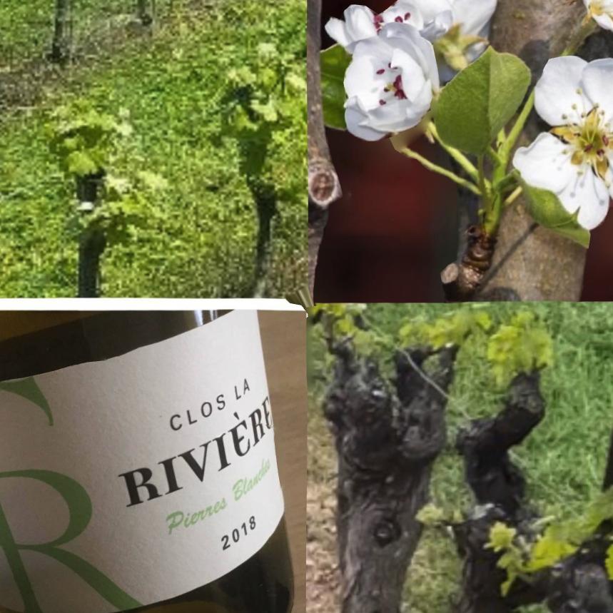 """Clos la Rivière """"Pierres Blanches"""" AOP Languedoc"""