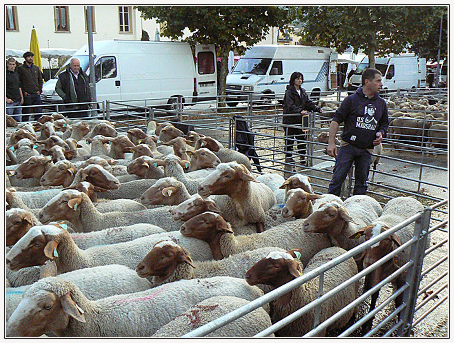 Foire agricole 2014 St André les Alpes