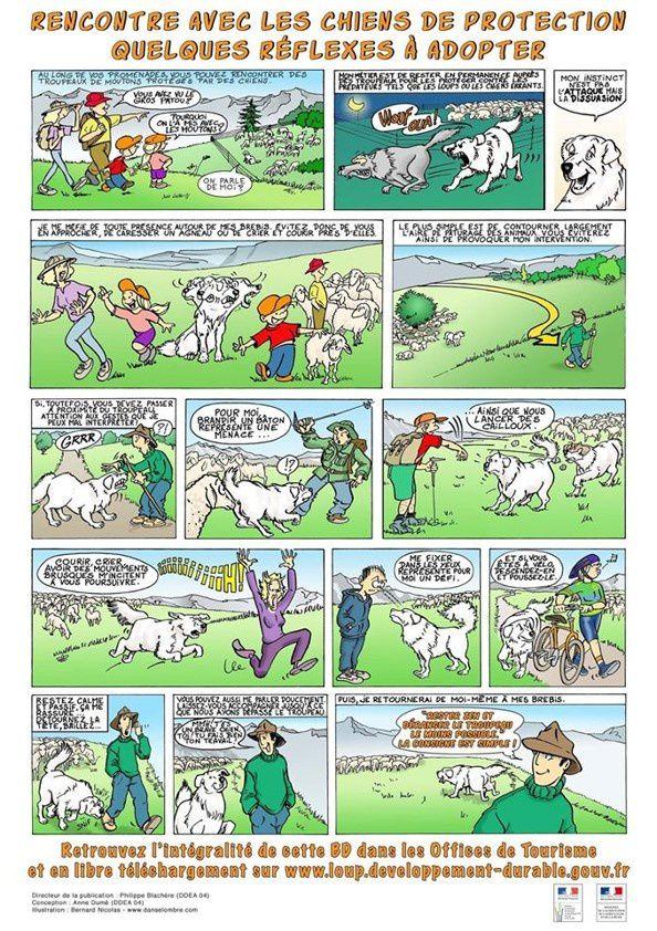 Illustration  des bons gestes lors de la rencontre avec les chiens de protection des troupeaux