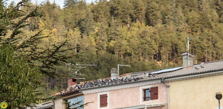 Les Pigeons visitent la Mure Argens
