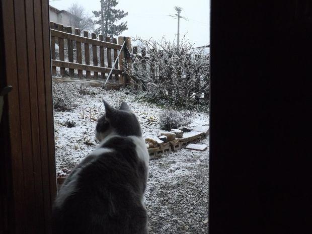 Le chat de Fernand à dit  : Pfff !  un temp de chien