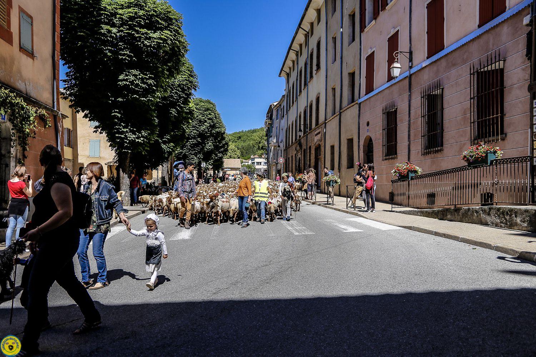 Castellane : Fête de la Transhumance le retour du troupeau