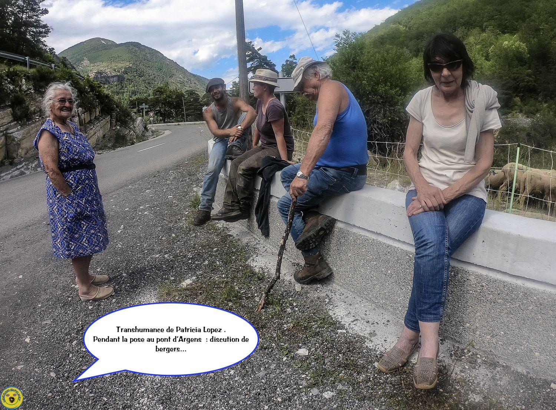 Le troupeau de Patricia Lopez de retour dans le Haut Verdon