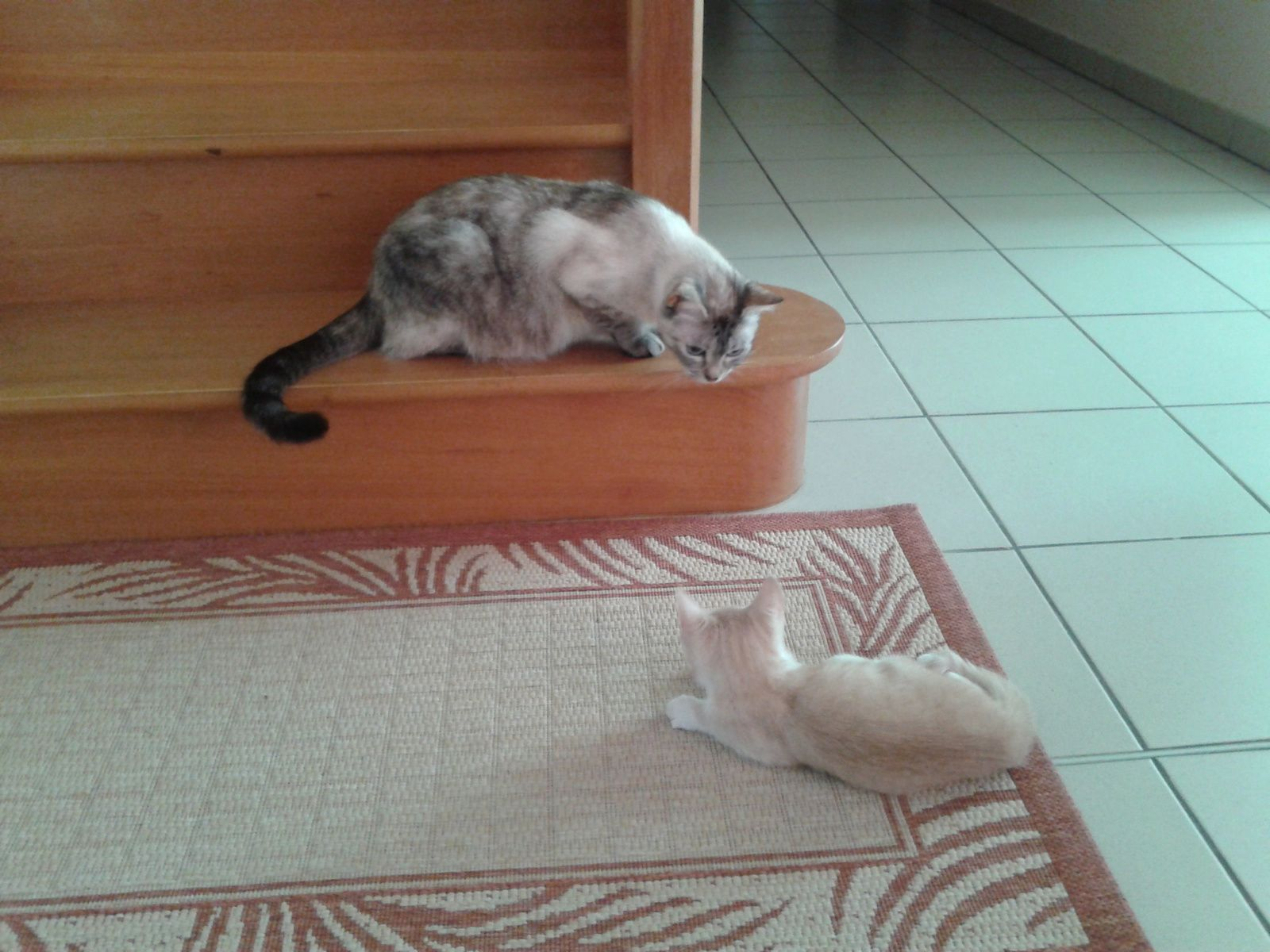 Vanille et Camel ... la rencontre au bas de l'escalier ...