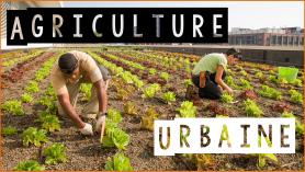 Des carottes dans le ciment : l'agriculture urbaine.
